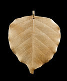 Lime leaf in gold Stock Photos