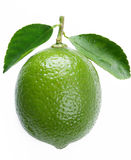 Lime with leaves Stock Image