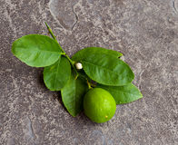 Lime and Leaves Royalty Free Stock Photos