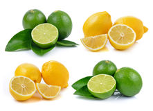 Lime and lemon on white background Royalty Free Stock Photography