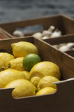 Lime, lemons and mushrooms Royalty Free Stock Photography