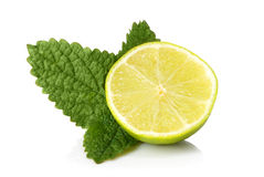 Lime and mint. On a white background Stock Photos