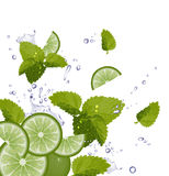 Lime, Mint and splash of water Royalty Free Stock Image
