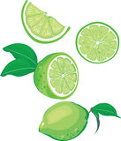 Lime mix. Green limes on white background Royalty Free Stock Image