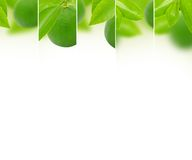 Lime mix Stock Images