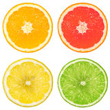 Lime, orange, grapefruit and lemon Stock Images