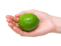 Lime in palm. Ripe lime in female palm. Isolation Royalty Free Stock Photo