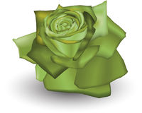 Lime Rose. Illustration of a Lime coloured rose Stock Image