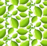 Lime seamless pattern Stock Photo