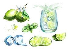 Lime set. Watercolor hand drawn illustration. stock illustration