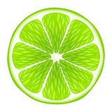 Lime slice isolated on white background. Royalty Free Stock Photo