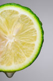 Lime Slice Macro Stock Image
