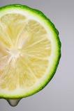 Lime Slice Macro Stock Image