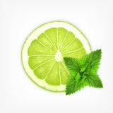 Lime slice with mint Royalty Free Stock Photos
