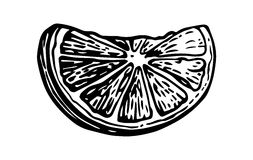 Lime slice. Vintage  engraving illustration for label, poster, web Stock Photos