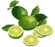 Lime with slices. Realistic illustration of limes with half and slices Stock Image