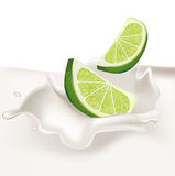 Lime slices falling in cream splash. Isolated Royalty Free Stock Image