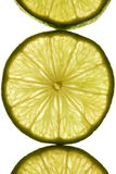 Lime slices by transmitted light Stock Images
