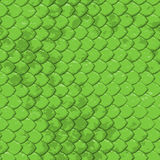 Lime snake texture - seamless Stock Image