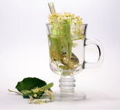 Lime tea Royalty Free Stock Photography