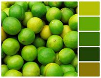 Lime texture with palette color swatches Royalty Free Stock Photo