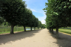 Lime tree alley. On a sunny day Stock Images