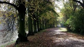 Lime tree avenue. In a park in fall stock video
