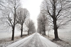 Lime Tree Avenue. Pivola, Slovenia Stock Photography