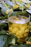 Lime tree blossom tea Stock Photo