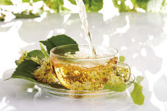 Lime tree blossom tee, herbal health tea in cup royalty free stock photos