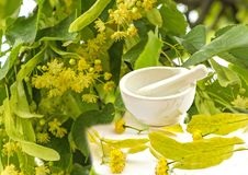Lime-tree blossoms Royalty Free Stock Photography