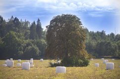 Lime tree and hay packed for winter season, Lithuania Royalty Free Stock Images