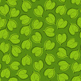 Lime-tree leaves Stock Image
