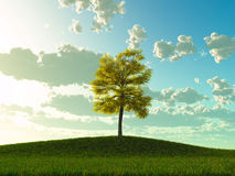 Lime tree on a meadow Stock Photo