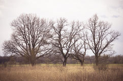 Lime Tree Stock Images