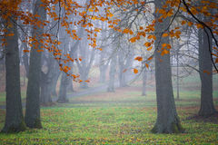 Lime trees in the mist Royalty Free Stock Photo