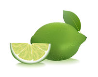 Lime vector illustration. Royalty Free Stock Photography