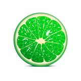 Lime vector illustration Stock Image