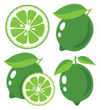 Lime vector illustration Stock Images
