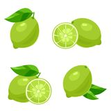 Lime. Vector Royalty Free Stock Images