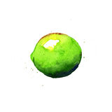 Lime. Watercolor illustration Stock Photos