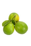 Lime on white background. Royalty Free Stock Image