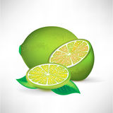 Lime whole half and slice Royalty Free Stock Photography