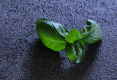Basil leaves. Basil leaves on working desk. Prepared for next use in the kitchen stock photo