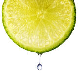 limefrukt arkivfoto
