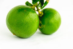 limefrukt royaltyfri bild