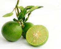 limefrukt royaltyfri fotografi