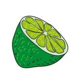 Limefrukt - handen drog frukter isolerade vektorn Arkivfoton