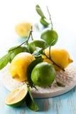 Limefrukt och citron royaltyfria bilder