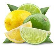 Limefrukt och citron royaltyfri fotografi